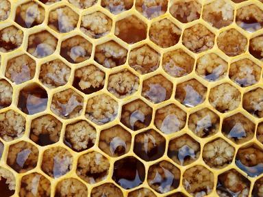 HoneyComb - GRethexis - Pixabay