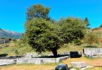Dodona_Zeus_Temple - Oak Tree - GRethexis