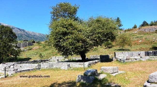 Dodona - Oak tree