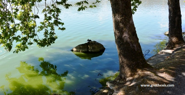 Kastoria - Lake - Bird