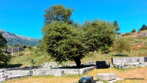 Dodona_Zeus_Temple - Oak Tree - GRethexis